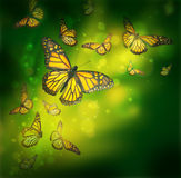 Flight of butterflies is in the rays Stock Photography