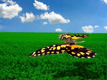 The flight of a  butterfly. Over a field Royalty Free Stock Image