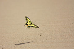 Flight of a butterfly Royalty Free Stock Photos