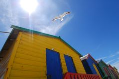 Flight colours. Soaring seagull in thermals above bright colour bathing boxes Royalty Free Stock Image