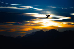 Flight of crow in the mountains Royalty Free Stock Photography