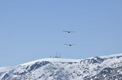 Flight of eagles with radio antenna and tv background Stock Photo