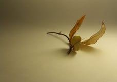 Flight of fancy. Humming-bird. flight of fancy Royalty Free Stock Photography