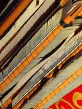 Flight feathers on arrows. The flight feathers on arrows used in medieval re-enactment events in Britain stock image