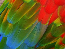 Flight feathers Royalty Free Stock Photo