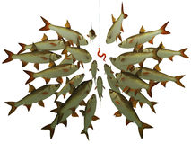 The flight of fishes looks at a hook. With a bait Royalty Free Stock Photography
