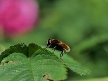 Flight fly insect. On plants background stock photography