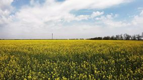 Flight forward over the field of rapeseed stock video footage