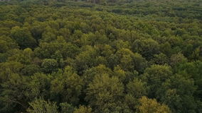 Flight forward over green deciduous forest stock footage