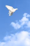 Flight of freedom Stock Photography