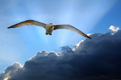 Flight of freedom stock images
