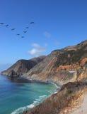 The flight of gray pelicans over azure water Stock Image