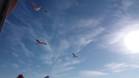 The flight of the gulls. stock footage