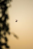 Flight of a hang-glider. A hang-glider flies over the park at sunset Stock Photos