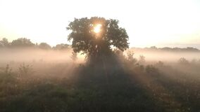 Flight in a meadow in the fog to the morning sun through the branches of trees