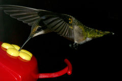 In-Flight Meal royalty free stock image