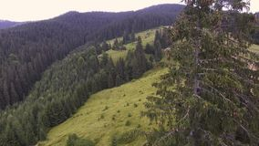 Flight in the mountains over the summer Carpathian forest. stock video