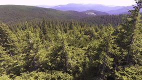 Flight in the mountains over the summer Carpathian forest. stock footage