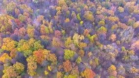 Flight over autumn park. Flight over beautiful colored autumn park stock footage