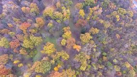Flight over autumn park. Flight over beautiful colored autumn park stock video footage