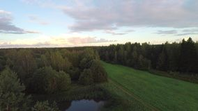 Flight over beautiful field and trees on background. Aerial rural landscape. Stunning aerial shot over lush green fields and meadows in the Estonian countryside stock video