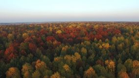 Flight over the crowns of colorful trees, aerial view stock footage
