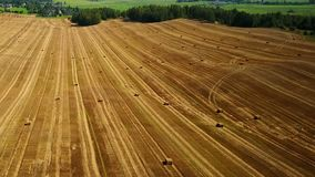 Flight over cultivated fields with haystacks after harvesting. Aerial panoramic view stock footage