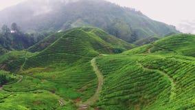 Flight over famous Ceylon`s tea plantation