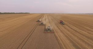 The Flight Over a Field of Wheat. Combine Harvester Gathers the Wheat crop stock video footage