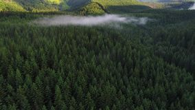 Flight over forest in mountains stock video