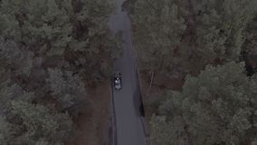 A flight over a forest park, pine trees, a flight over the treetops and a road along which a black sports car rides stock video footage