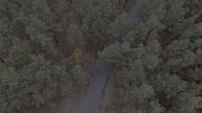 Flight over a forest park, pine trees, flight over treetops and a road, travel, aerial survey spring park, woods. Hd stock video