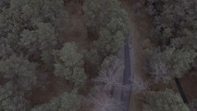 A flight over a forest park, pine trees, flying over treetops and a road in a circle, aerial survey spring park, woods. A flight over a forest park, pine trees stock footage