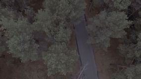 A flight over a forest park, pine trees, flying over treetops and a road with a speed limit sign. Hd stock footage