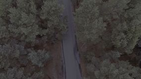 A flight over a forest park, pine trees, a flight over treetops and a road along which a car drives, a family car. Travels hd stock footage