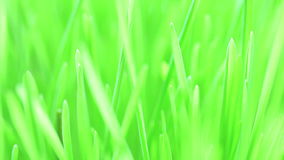 Flight over fresh new green grass stock footage