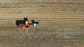 Flight over harvesting potatoes with potato-digger trailer, tractor and people. Aerial top view stock video