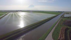 Flight over the Italian rice fields in a beautiful sunny day. Drone on Italian rice fields in the Po River stock video