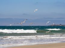 Flight over lighthouse. Several sea-gulls flying over an ocean beach with waves and lighthouse on background Stock Photos
