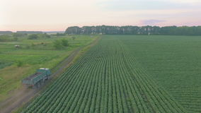 Flight over local road with truck on it between bean field and garden. At sunset stock video footage