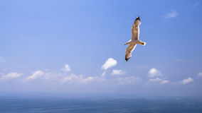 Flight over the ocean Royalty Free Stock Image