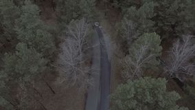 Flight over a pine forest, park, road, aerial survey spring park, woods. Flight over a pine forest, park, road stock video