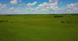 Flight over the quadcopter over a green meadow. Over the plains with rare trees on a sunny summer day stock video