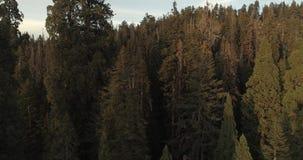 Flight over the Sequoia National Park. 4K. Nov 2017 stock video footage
