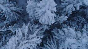 Flight over the snow-covered spruce forest after sunset. Aerial stock video footage