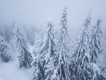 Flight over snowstorm in a snowy mountain coniferous forest, unc. Aerial view on the coniferous forest in the mountains in winter. Heavy snow and blizzard Royalty Free Stock Photos