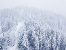 Flight over snowstorm in a snowy mountain coniferous forest, unc Royalty Free Stock Photo
