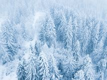 Flight over snowstorm in a snowy mountain coniferous forest, unc Stock Photos