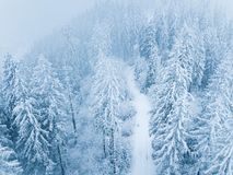 Flight over snowstorm in a snowy mountain coniferous forest, unc Stock Photo