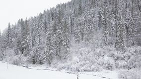 Flight over snowy mountain coniferous forest. Overcast frosty weather stock video